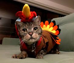 kitty turkey
